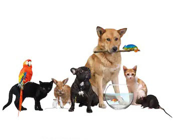 group-pets-isolated-on-white-260nw-1050239354.jpg
